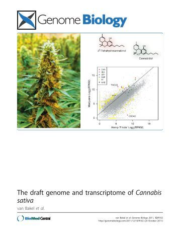 genome of cannabis sativa essay This project provides the assembled draft genome and transcriptome of cannabis sativa the high-potency medical marijuana strain purple kush was used for sequencing.