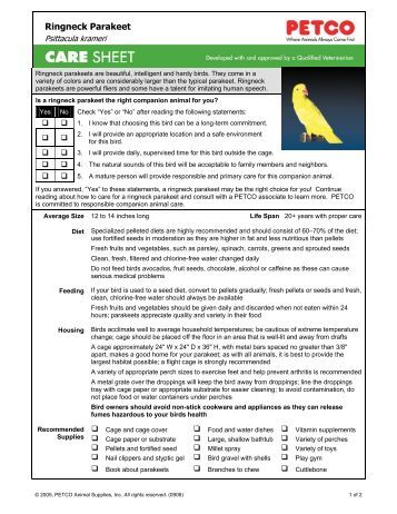 how to take care of a budgie parakeet