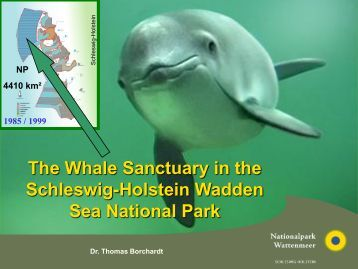 The Whale Sanctuary in the Schleswig-Holstein Wadden Sea ...