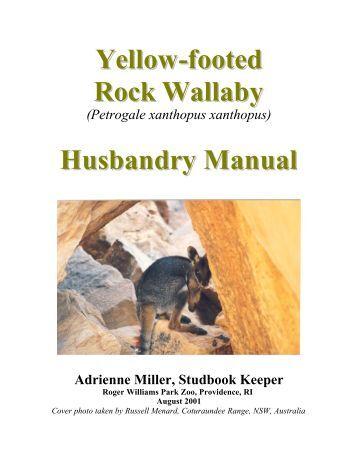 panda manual pdf python dataframe