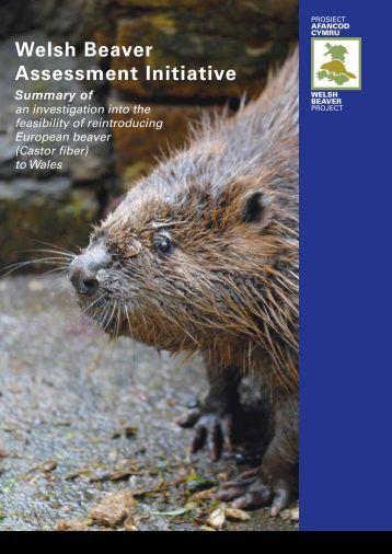 Beaver-Summary-report-English