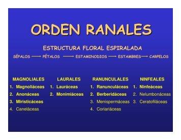 Ranales-papaverales-geraniales-sapindales