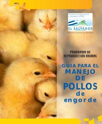 Guía para el manejo de pollos de engorde