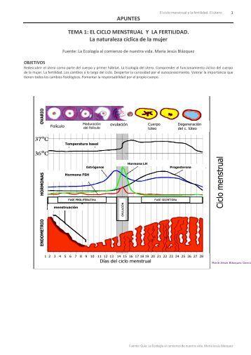 ciclo menstrual y útero - Otra Biología