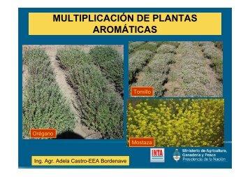 MULTIPLICACIÓN DE PLANTAS AROMÁTICAS - INTA