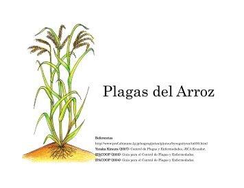 Plagas del Arroz - JICA