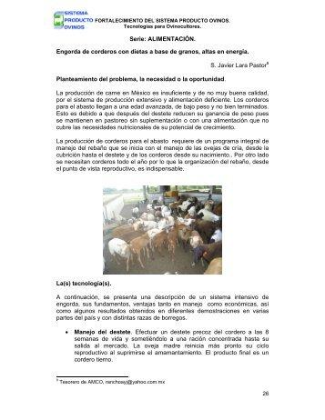 Engorda de corderos - Asociación Mexicana de Criadores de ...