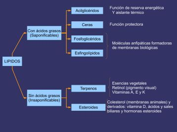 LIPIDOS Con ácidos grasos (Saponificables) Sin ácidos grasos ...