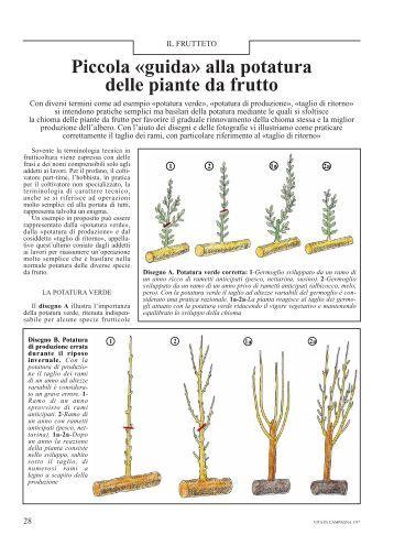 Progetto di piccola cantina per una produzione vita for Potatura piante da frutto