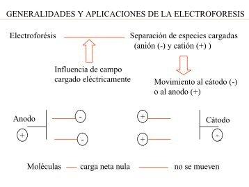 Electroforésis Separación de especies cargadas ... - Web del Profesor