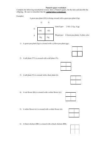 Printables Punnett Square Worksheet Answers square worksheet answer key davezan punnett davezan