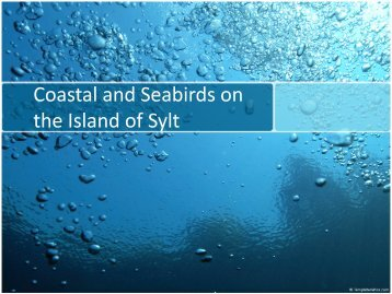Coastal and Seabirds on the Island of Sylt
