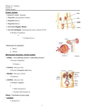 biology urinary system Including the four major organs of the urinary system students  after studying  biological sciences at clemson university, i served as a peace corps volunteer .