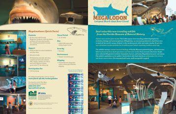 Download Brochure PDF - Florida Museum of Natural History ...