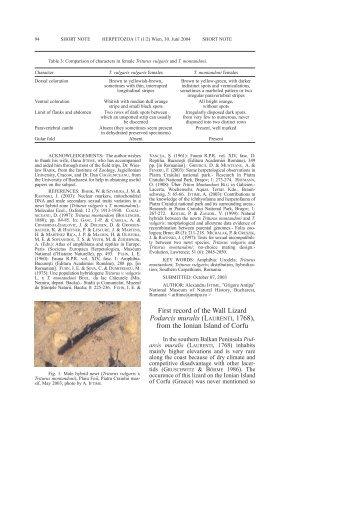 First record of the Wall Lizard Podarcis muralis ... - VipersGarden