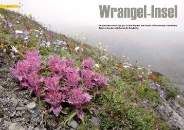 Wrangel Island - Polar-Reisen.ch