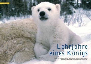 Lehrjahre eines Königs - Polar-Reisen.ch