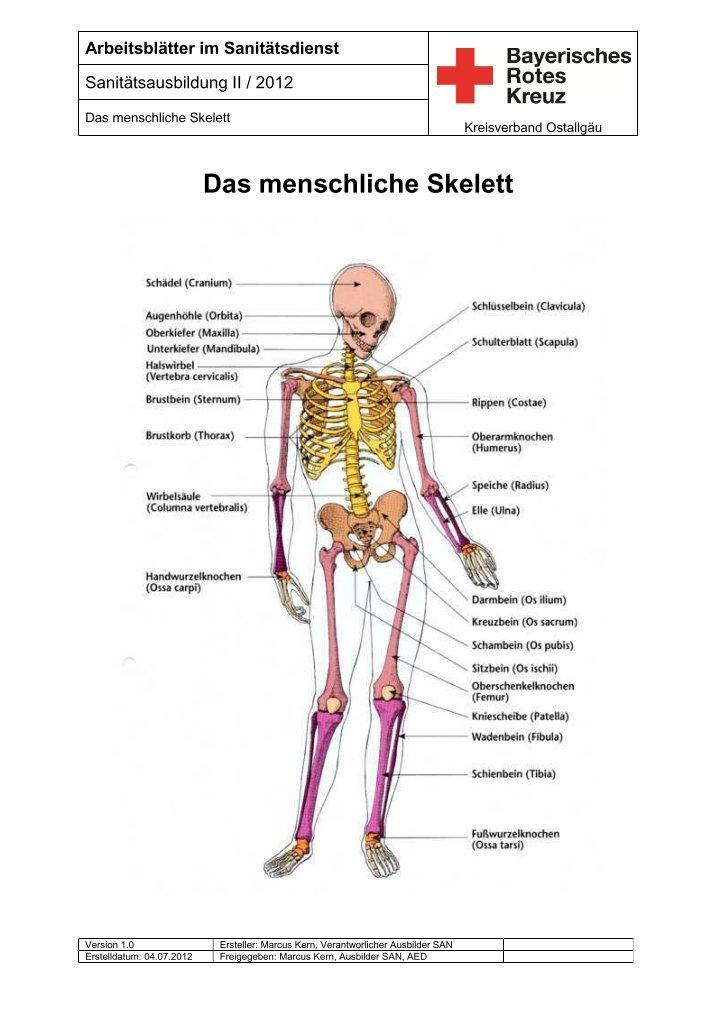 Old Fashioned Skelett Kennzeichnung Arbeitsblatt Pictures ...