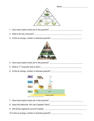 Food chains food webs and ecological pyramids worksheet answers