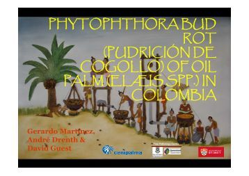 of oil palm