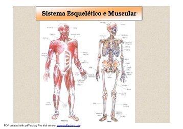 sistema esquelético e muscular - Colégio Alexander Fleming