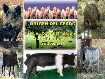 Cerdo Doméstico - Centro de Información de Actividades Porcinas