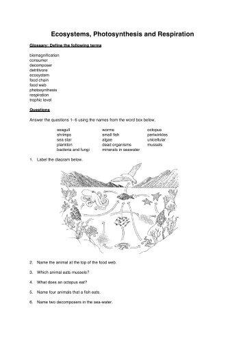 Free ecosystem worksheets 3rd grade