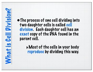 Section 8 2 review cell division worksheet answer key