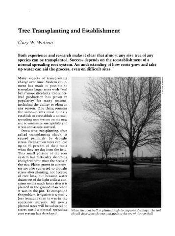 Tree Transplanting and Establishment