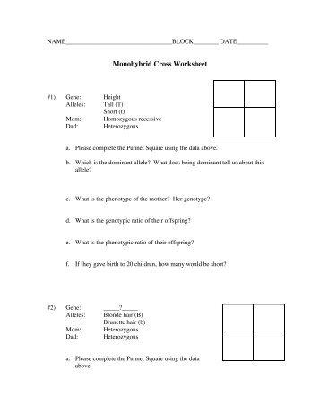 monohybrid cross worksheet | Adcontessa