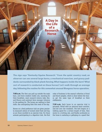 Day in the Life of a Research Horse - Kentucky Equine Research