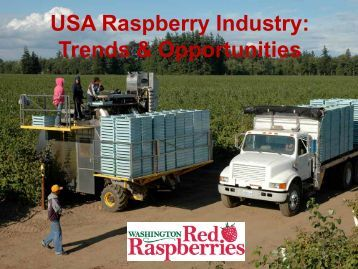 USA Raspberry Industry: Trends & Opportunities - Washington Red ...