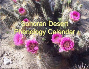 Sonoran Desert Phenology Calendar - USA National Phenology ...