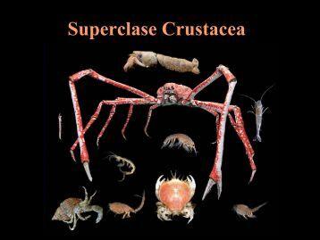 crustaceos jasc 2011.pdf - Iesmaritimopesquerolp.org