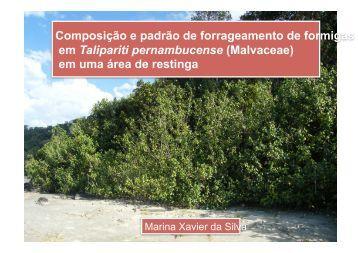 06 - Marina Xavier