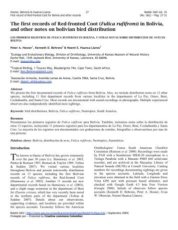 The first records of Red-fronted Coot (Fulica rufifrons) in Bolivia, and ...