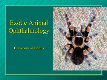 Exotic Animal Ophthalmology - Small Animal Hospital - University of ...