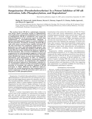 Sanguinarine (Pseudochelerythrine) Is a Potent Inhibitor of NF- B ...