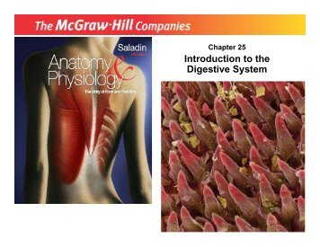 introduction to digestive system pdf