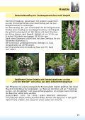 Gottesdienst Gottesdienst Taborgemeinde Sommerwetter - Page 2