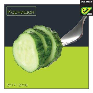 Cucumber Russia 2017-2018