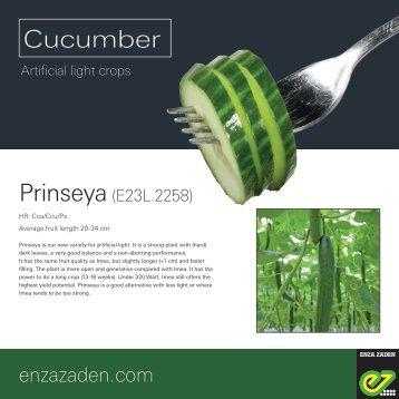 Leaflet Cucumber Prinseya Scandinavia