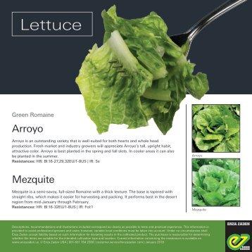 Leaflet Lettuce 2018