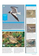 Bird Watching Preview - Page 7