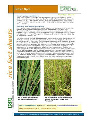 punjab land record manual pdf
