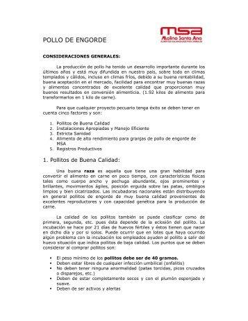 POLLO DE ENGORDE - Molino Santa Ana