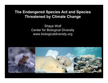 climate change and endagered species essay Scientists and conservationists who study the animal species that face a high risk of extinction refer to such species as endangered species  climate change,.