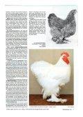 Eine Lanze für unsere Cochin! - Brahma-, Zwerg-Brahma- und Cochin - Seite 3