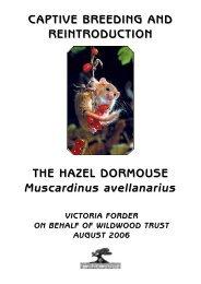Dormouse captive breeding fact sheet - Wildwood Trust