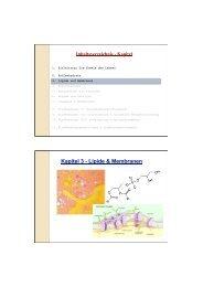 3-Lipide & Membranen